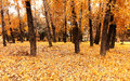 Autumn in a forest Royalty Free Stock Image