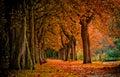 Jeseň v les