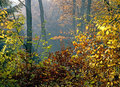 Autumn forest Photo stock