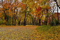 Autumn forest alley alee padure toamna frunze cazute banci verzi fallen leaves in green banks Royalty Free Stock Images