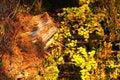 Autumn forest askew snag, vertical
