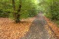 Autumn forest autumnal and path in mist Royalty Free Stock Photography