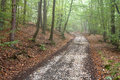 Autumn forest autumnal and path in mist Royalty Free Stock Images