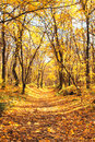 Autumn forest beautiful landscape and sun Stock Image