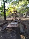 Autumn forest bench chess day Royalty Free Stock Photo