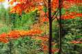 Autumn forest in bohemian paradise colorful Stock Photo