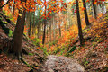 Autumn forest in bohemian paradise colorful Stock Photography