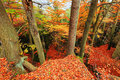Autumn forest in bohemian paradise colorful Royalty Free Stock Photos