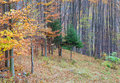 Autumn forest border Royalty Free Stock Photography