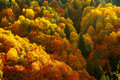 Autumn forest in bright colors Stock Images