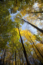 Autumn forest / bright colors of leaves / sunlight Royalty Free Stock Photography
