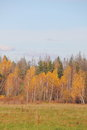 Autumn forest in the central part of russia rural Stock Photos