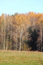 Autumn forest in the central part of russia rural Royalty Free Stock Images