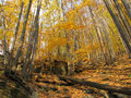 Autumn forest colorful leaves in Stock Photos