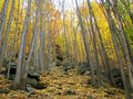 Autumn forest colorful leaves in Stock Photo