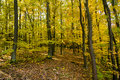 Autumn forest colorful trees in Royalty Free Stock Photos