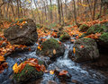 Autumn forest with creek beautiful day in the misty Stock Photo