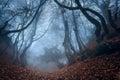 Otoño bosque