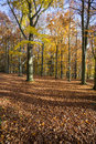 Autumn forest in czech republic foliage Stock Image