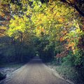 Autumn forest dirt road in the fall foliage leaves Stock Photo