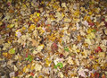 Autumn Forest Floor Royalty Free Stock Photography