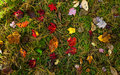 Autumn Forest Floor Royalty Free Stock Photo