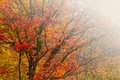 Autumn forest with fog. Royalty Free Stock Photography