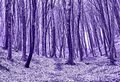 Forest in Violet Royalty Free Stock Photo