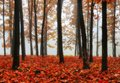 Forest. foggy morning in a picturesque autumn forest