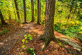 Autumn forest hiking trail a in a park during the season Royalty Free Stock Image
