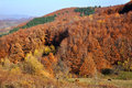 Autumn forest on the hills transylvanian Stock Photography