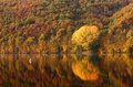 Autumn forest and lake landscape Royalty Free Stock Photography