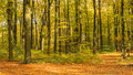 Autumn in the forest landscape format Stock Images