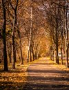 Autumn forest long path perspective Stock Photo