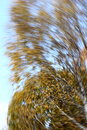 Autumn forest motion blur