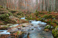 Autumn forest with a mountain river