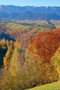 Autumn forest in mountains Stock Photos
