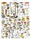 Autumn Forest Mushrooms Scene. Autumn Mushrooms Collage. Big Mushroom Collection Hand Drawn Illustrations. / Antique Engraved Illu