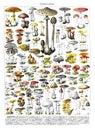 Autumn Forest Mushrooms Scene. Autumn Mushrooms View. Mushroom Collection Hand Drawn Illustrations. / Antique Engraved Illustratio
