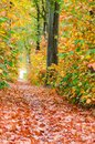 Autumn forest nature background. Autumn, fall forest. Path of red leaves towards light Royalty Free Stock Photo
