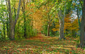 Autumn Forest Path Royalty Free Stock Image