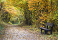 Autumn forest path with wood bench Royalty Free Stock Photo