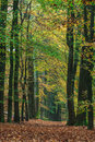 Autumn forest path in the Dutch park Veluwe Royalty Free Stock Photography