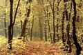 Autumn forest path with early morning sun rays Royalty Free Stock Photo