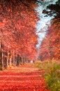 Autumn forest path with falling red leaves Stock Photo