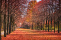 Autumn forest path with falling red leaves Stock Photos