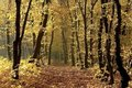 autumn forest path at sunrise Royalty Free Stock Photo