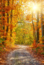 Autumn forest pathway in the Royalty Free Stock Image