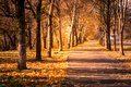 Autumn forest pathway through the Royalty Free Stock Photo