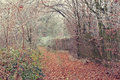 Autumn forest pathway in dry Stock Image